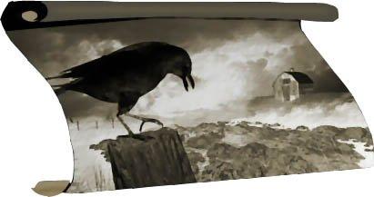 crow22.jpg